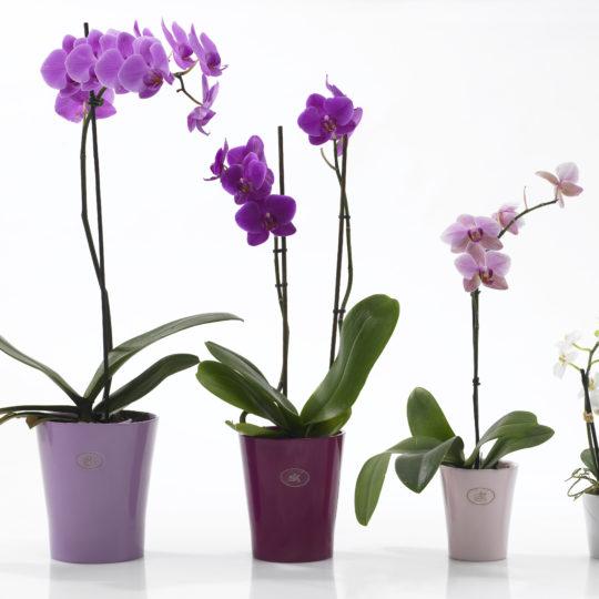 Plastic Orchid Outer Pots